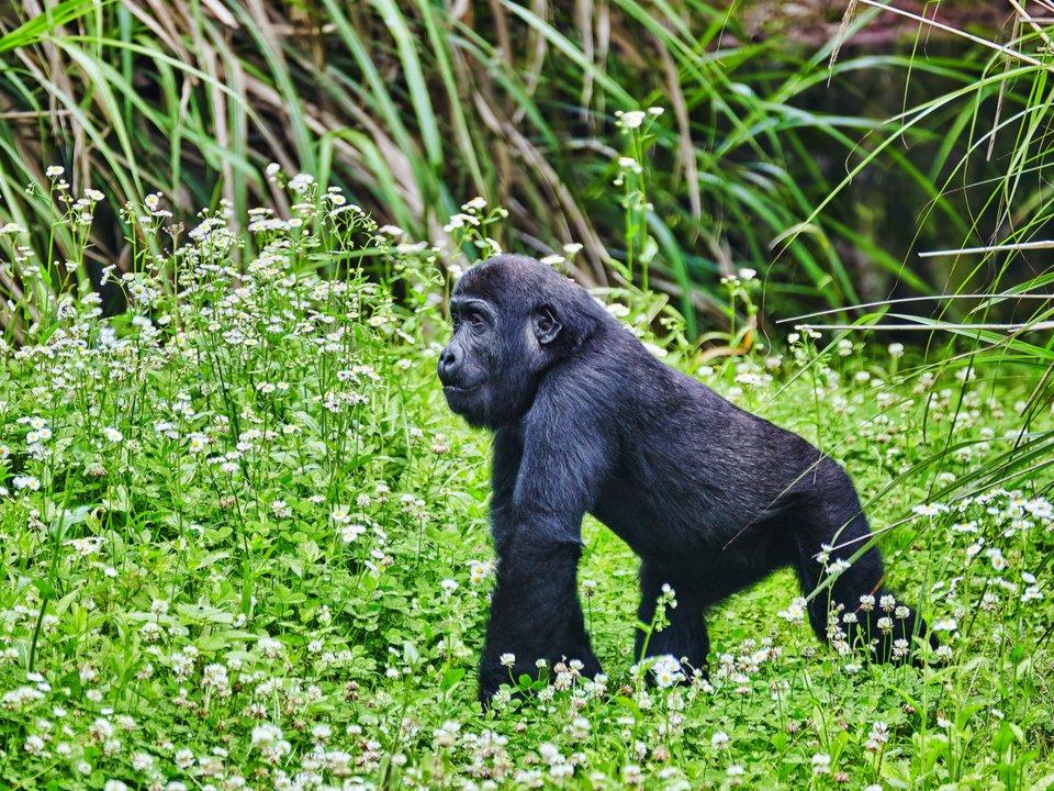 Bwindi Forest National Park, Uganda