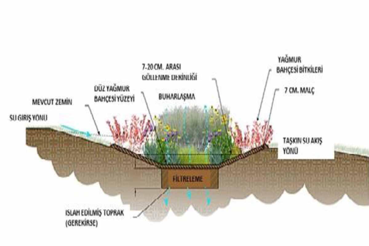 Yağmur Bahçeleri Nedir?☔Yağmur Bahçesi Ne İşe Yarar?